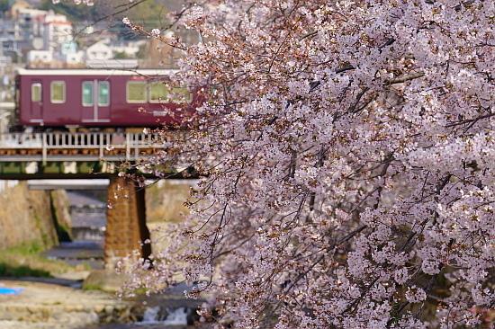 4月7日 阪急と嵐電の桜を愛でる_f0037227_20273939.jpg