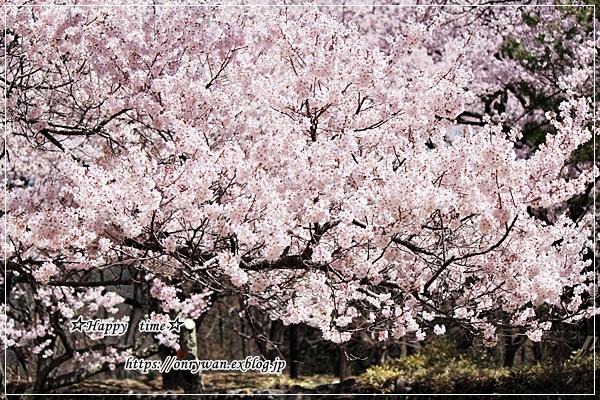 磯辺で肉巻き弁当と桜満開とっても綺麗、と聞いたので♪_f0348032_18053178.jpg