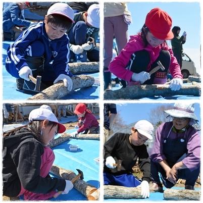 鮭稚魚放流会とシイタケ植菌体験なのだ!_c0259934_13423675.jpg