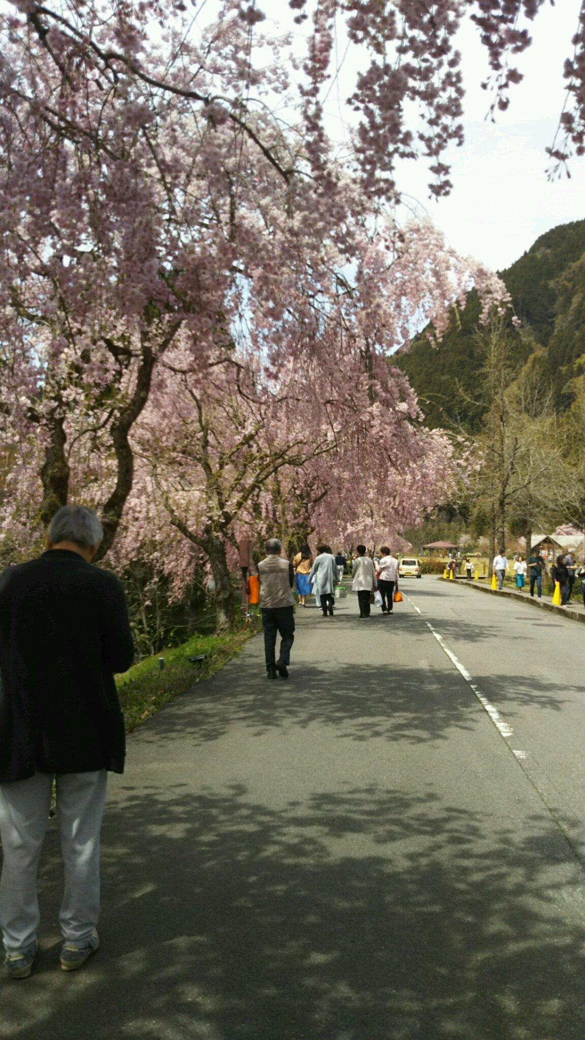 竹田の芝桜_f0040734_21141571.jpg
