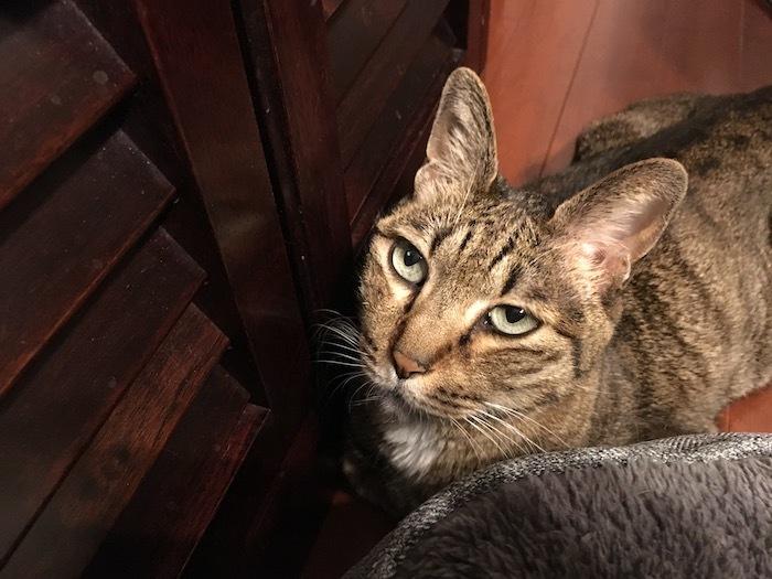 猫沼落ち_e0359436_10243954.jpg
