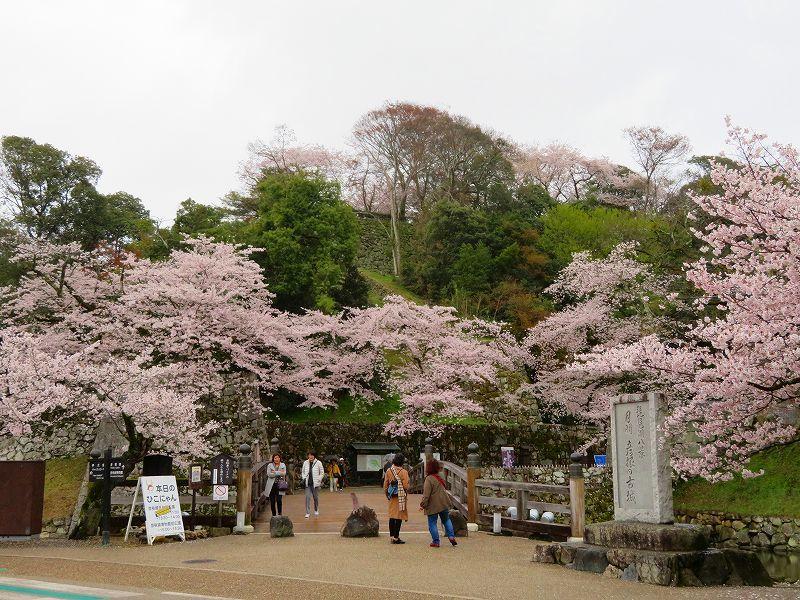 桜がきれいな彦根城(国宝)を散策20190410_e0237645_21080648.jpg