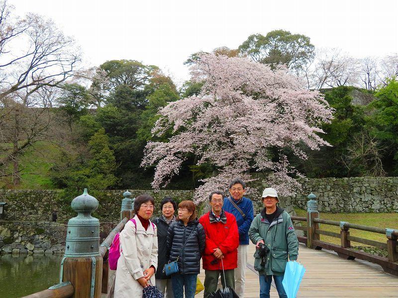 桜がきれいな彦根城(国宝)を散策20190410_e0237645_21080689.jpg