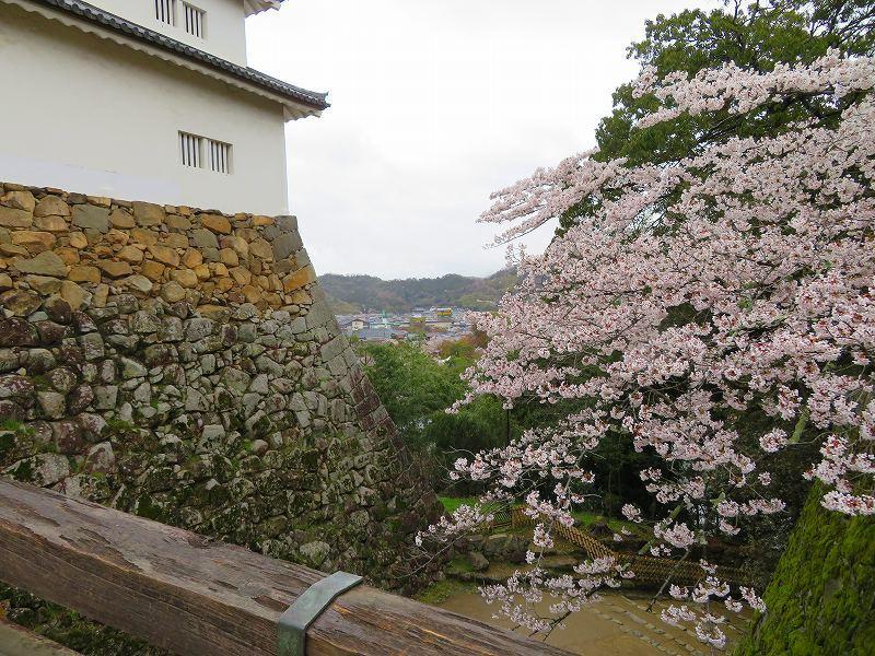 桜がきれいな彦根城(国宝)を散策20190410_e0237645_21080778.jpg