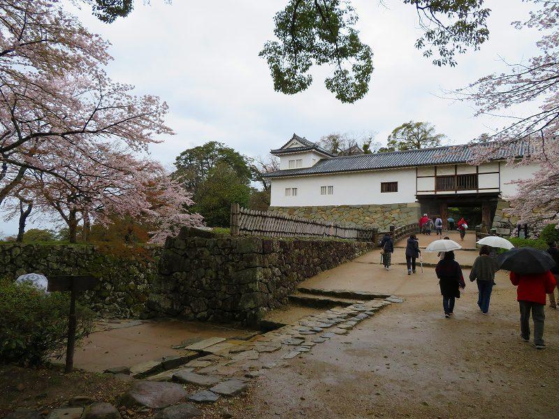 桜がきれいな彦根城(国宝)を散策20190410_e0237645_21080799.jpg