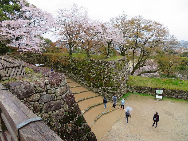 桜がきれいな彦根城(国宝)を散策20190410_e0237645_21080870.jpg