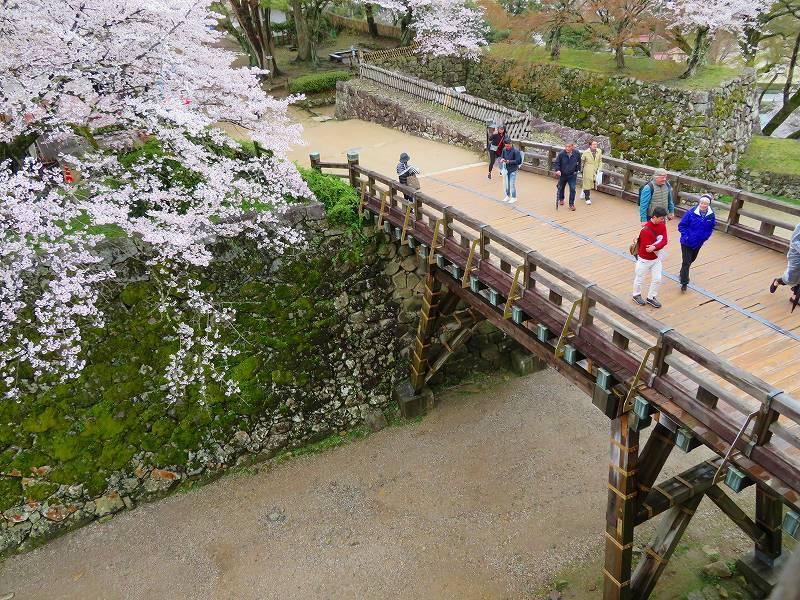 桜がきれいな彦根城(国宝)を散策20190410_e0237645_21094912.jpg