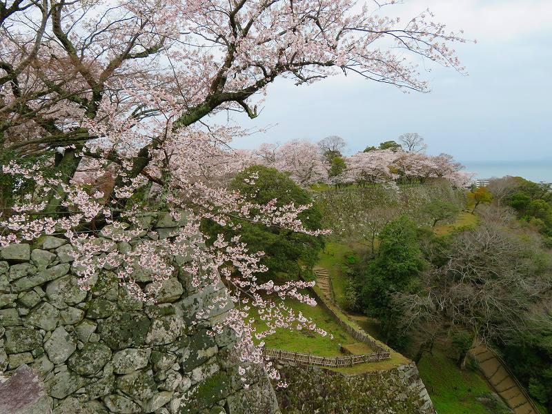 桜がきれいな彦根城(国宝)を散策20190410_e0237645_21094957.jpg