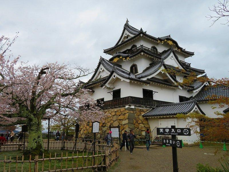 桜がきれいな彦根城(国宝)を散策20190410_e0237645_21094963.jpg