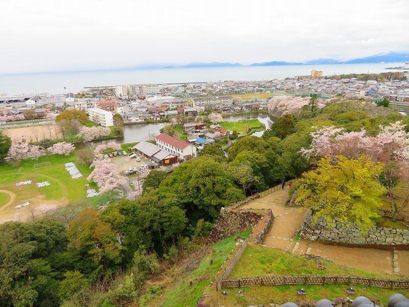 桜がきれいな彦根城(国宝)を散策20190410_e0237645_21095023.jpg
