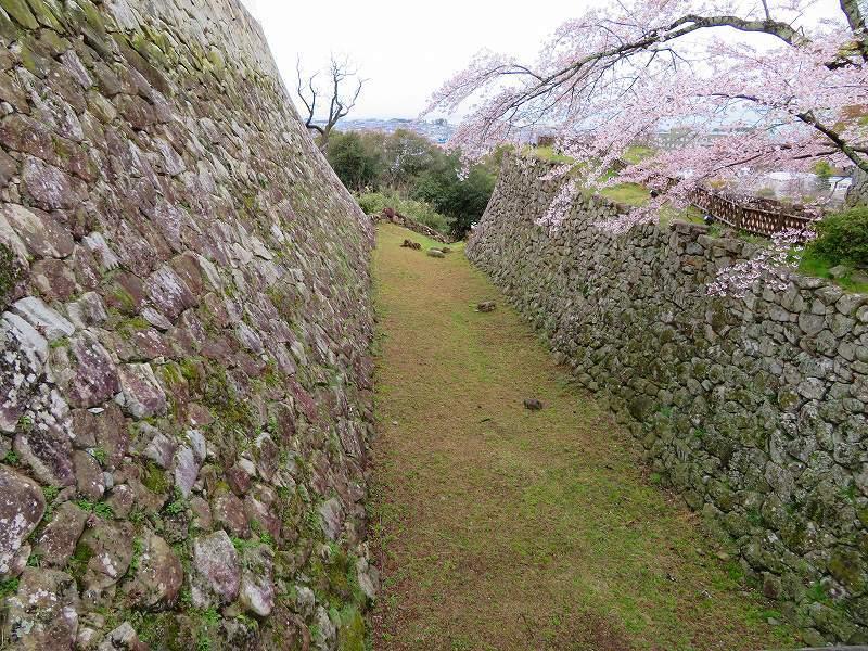 桜がきれいな彦根城(国宝)を散策20190410_e0237645_21095079.jpg
