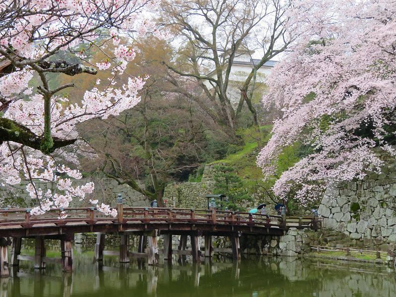 桜がきれいな彦根城(国宝)を散策20190410_e0237645_21095095.jpg