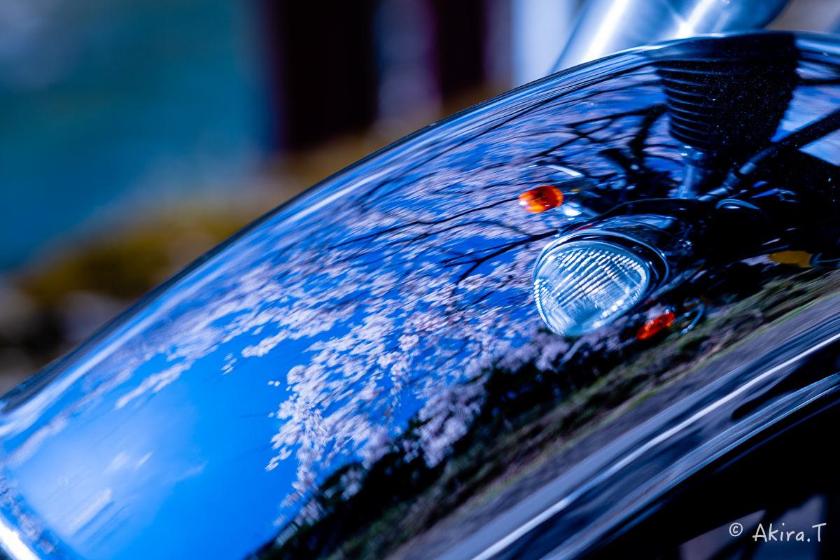 京都の桜 2019 〜6〜_f0152550_21162945.jpg
