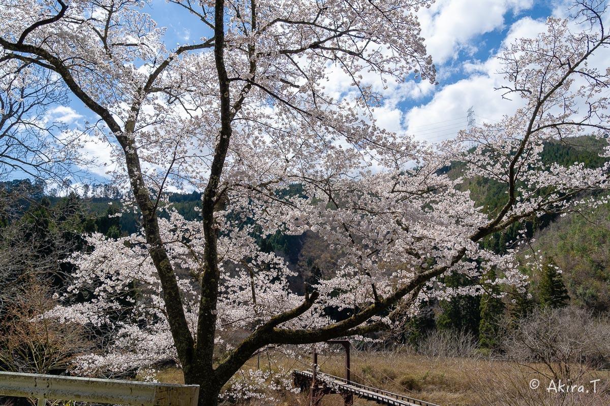 京都の桜 2019 〜6〜_f0152550_21163757.jpg
