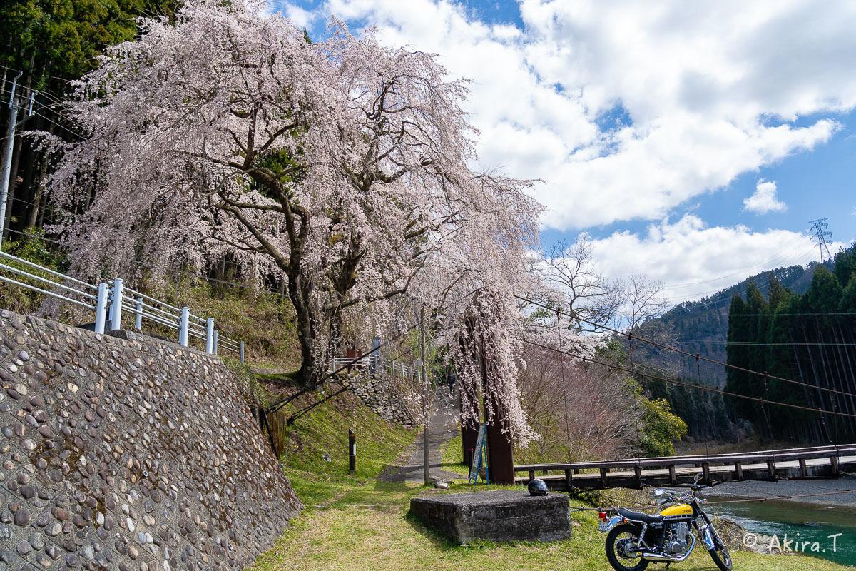 京都の桜 2019 〜6〜_f0152550_21170234.jpg