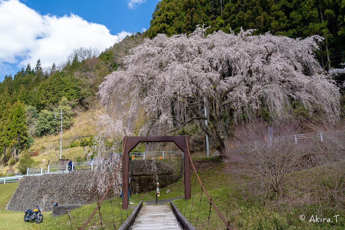 京都の桜 2019 〜6〜_f0152550_21171253.jpg