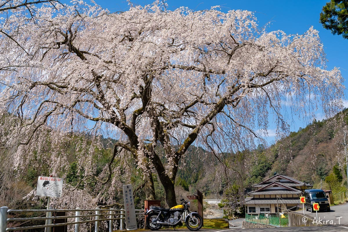 京都の桜 2019 〜6〜_f0152550_21175314.jpg