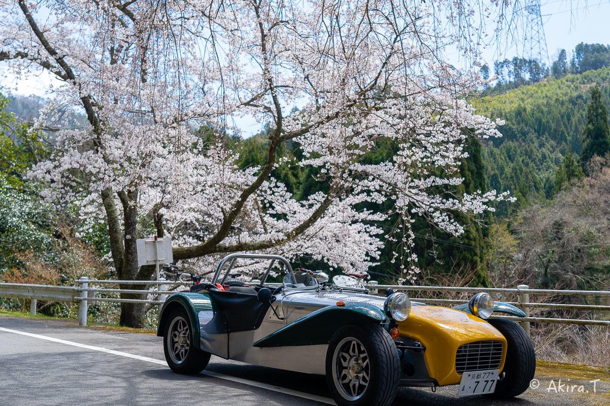 京都の桜 2019 〜6〜_f0152550_21180843.jpg