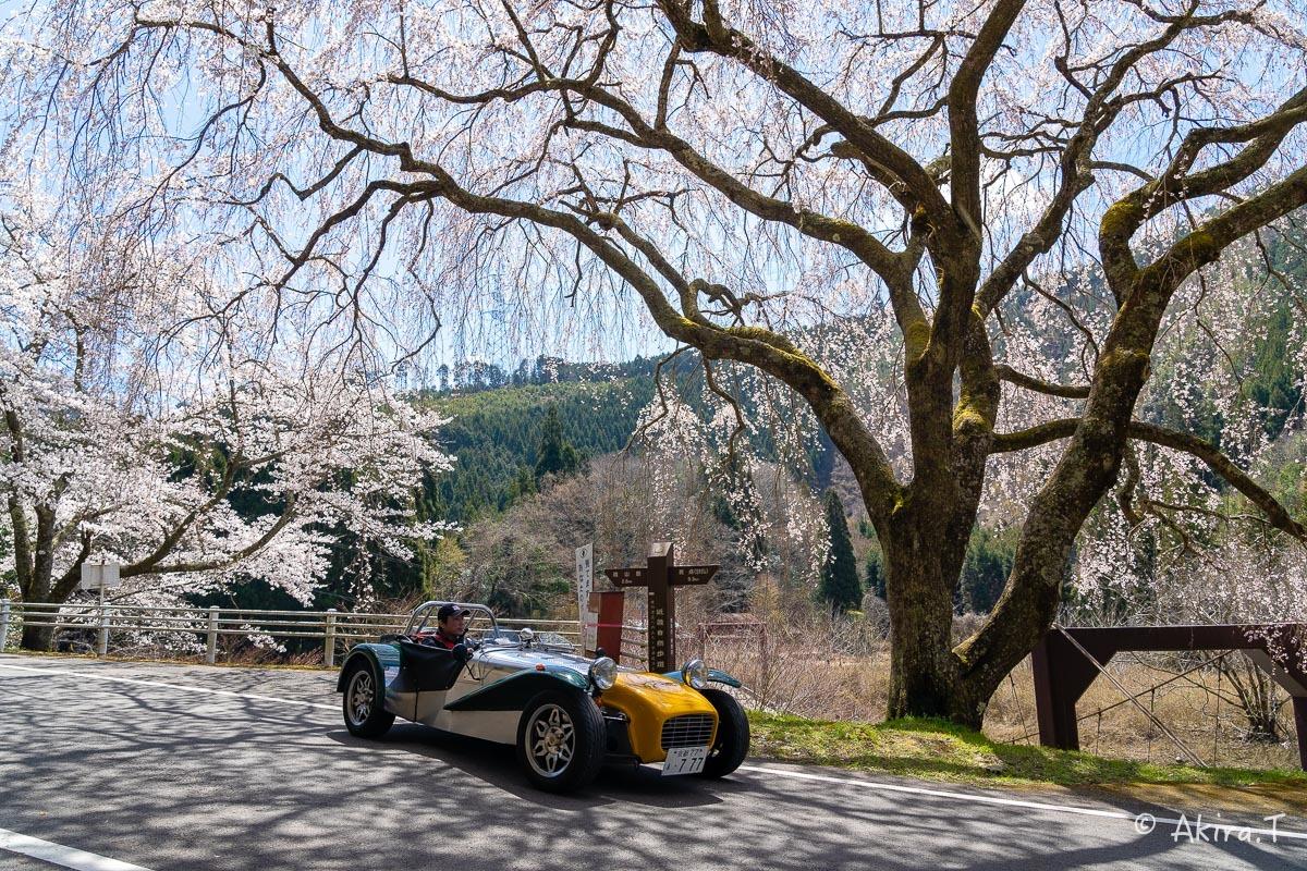 京都の桜 2019 〜6〜_f0152550_21193885.jpg