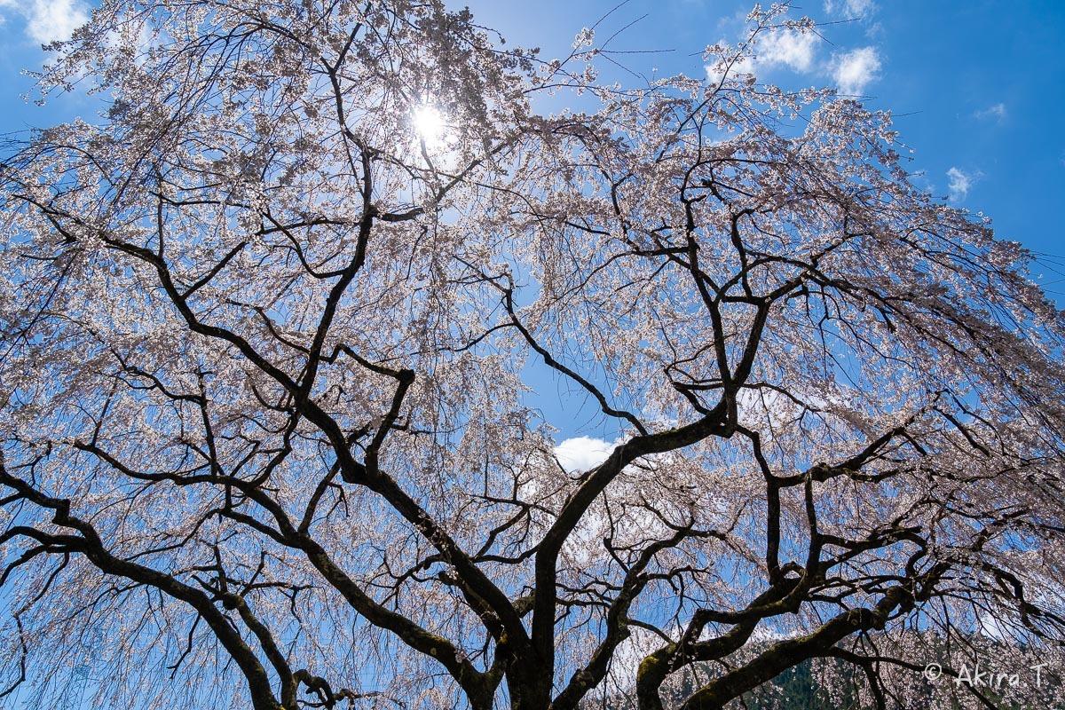 京都の桜 2019 〜6〜_f0152550_21194930.jpg