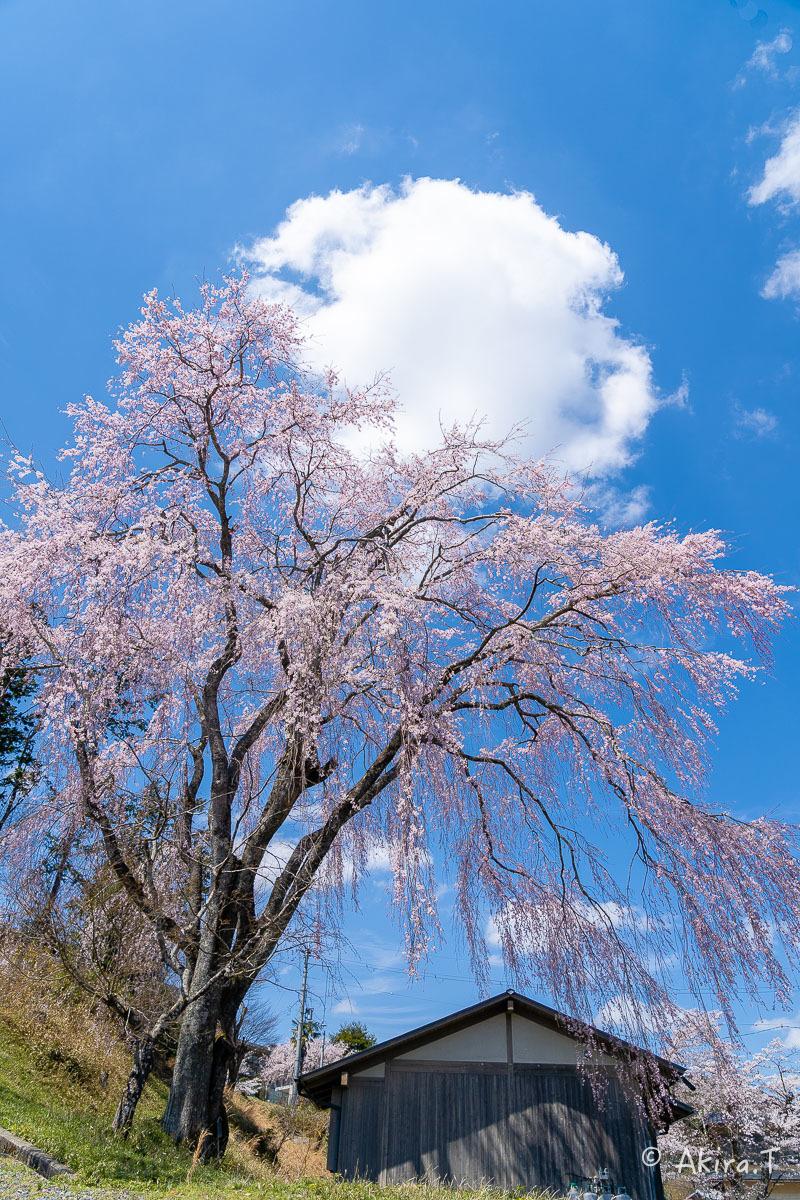 京都の桜 2019 〜6〜_f0152550_21222444.jpg