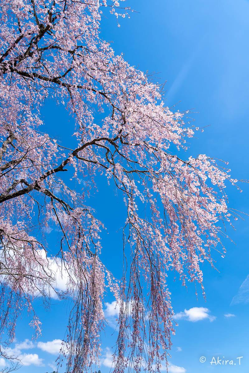 京都の桜 2019 〜6〜_f0152550_21224769.jpg