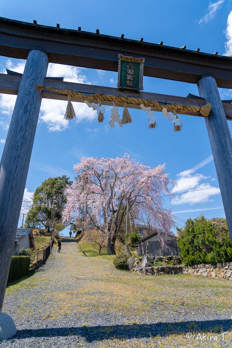 京都の桜 2019 〜6〜_f0152550_21231754.jpg