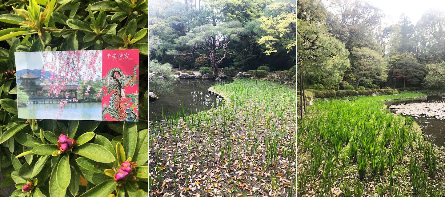 散りゆく桜も情趣あふれるもの。そして菖蒲や藤と移りゆく。_b0215856_14411563.jpg