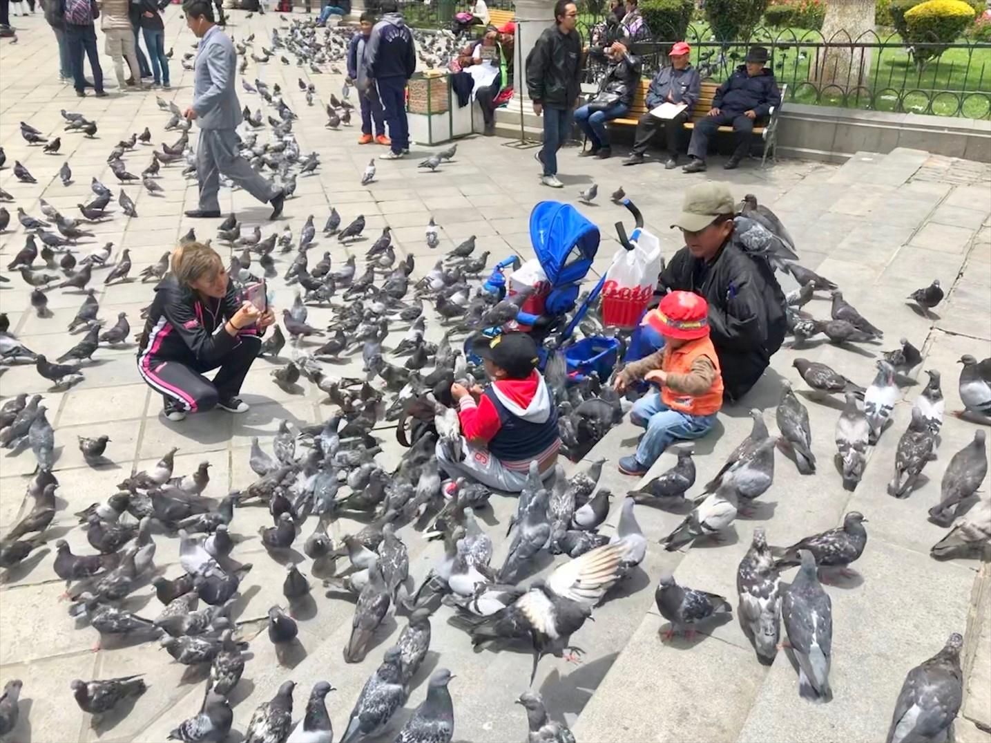 """中南米の旅/19  """"ムリリョ広場"""" は鳩だらけ(*_*) @ボリビア _a0092659_13310333.jpg"""