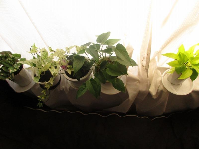 植物「出来る事から始めてみる」_b0362459_20265869.jpg