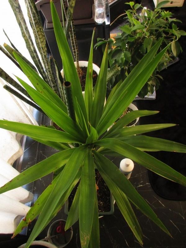 植物「出来る事から始めてみる」_b0362459_20424321.jpg