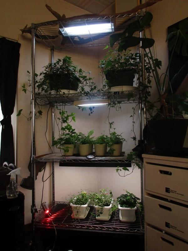 植物「出来る事から始めてみる」_b0362459_20505093.jpg