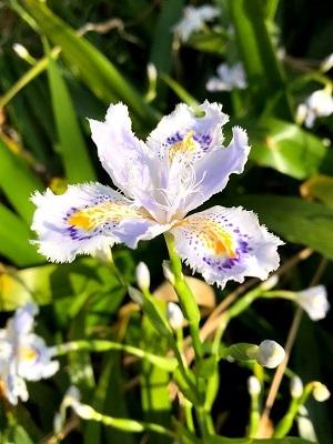 春爛漫♪♪_e0263559_23161209.jpg