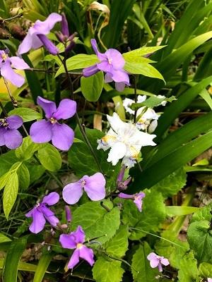 春爛漫♪♪_e0263559_23161256.jpg