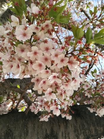 大阪行き_a0007462_19142903.png