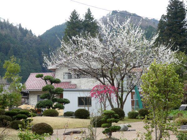 春のお花が_e0365880_22231958.jpg