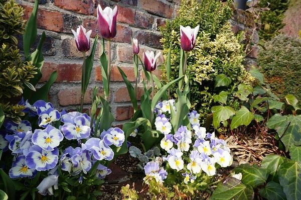 春のお花が_e0365880_22234838.jpg