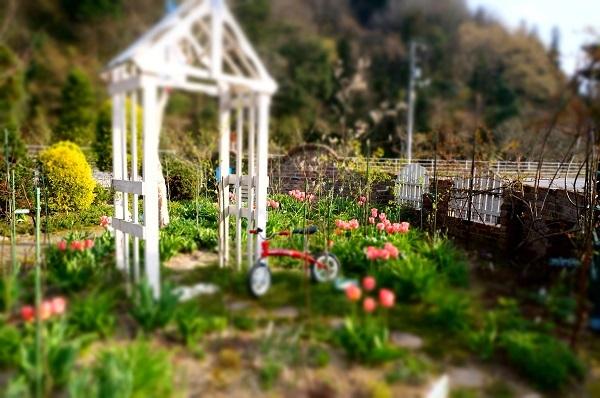 春のお花が_e0365880_22235737.jpg