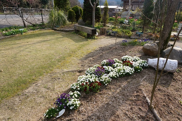 春のお花が_e0365880_22242742.jpg