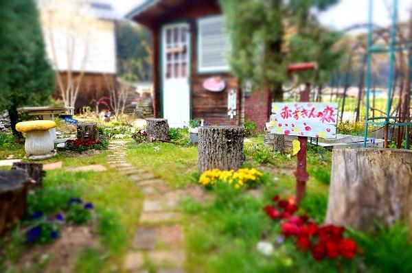 春のお花が_e0365880_22244112.jpg