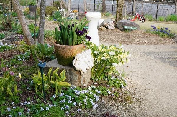 春のお花が_e0365880_22245201.jpg