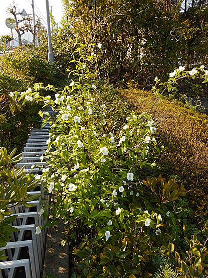 鎮守の森周辺に咲く春の花たち_e0066586_12244269.jpg