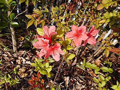 鎮守の森周辺に咲く春の花たち_e0066586_12244794.jpg
