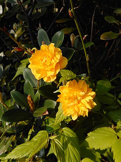 鎮守の森周辺に咲く春の花たち_e0066586_12245194.jpg