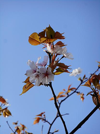 鎮守の森周辺に咲く春の花たち_e0066586_12245660.jpg