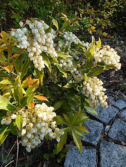 鎮守の森周辺に咲く春の花たち_e0066586_12250488.jpg