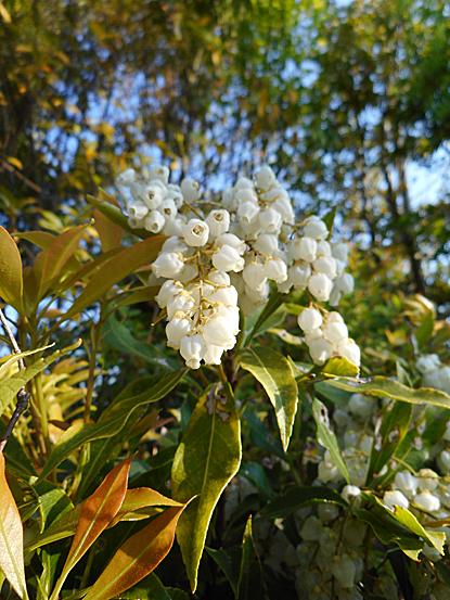 鎮守の森周辺に咲く春の花たち_e0066586_12250910.jpg