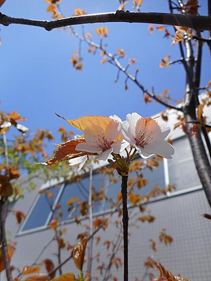 鎮守の森周辺に咲く春の花たち_e0066586_12252607.jpg