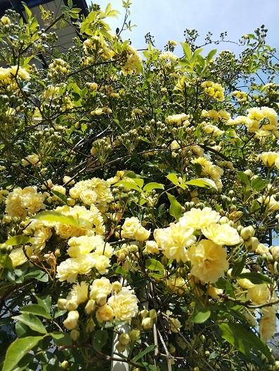 今日の庭_d0043390_22103708.jpg