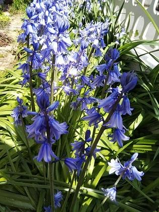 今日の庭_d0043390_22123827.jpg